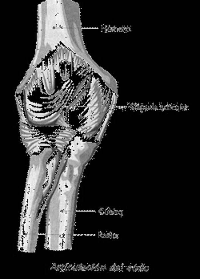 Anatomía Del Sistema Músculoesquelético | Enfermería en Cuidados ...